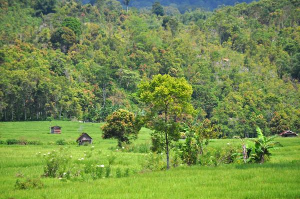 Kredit Foto : dananwahyu.com