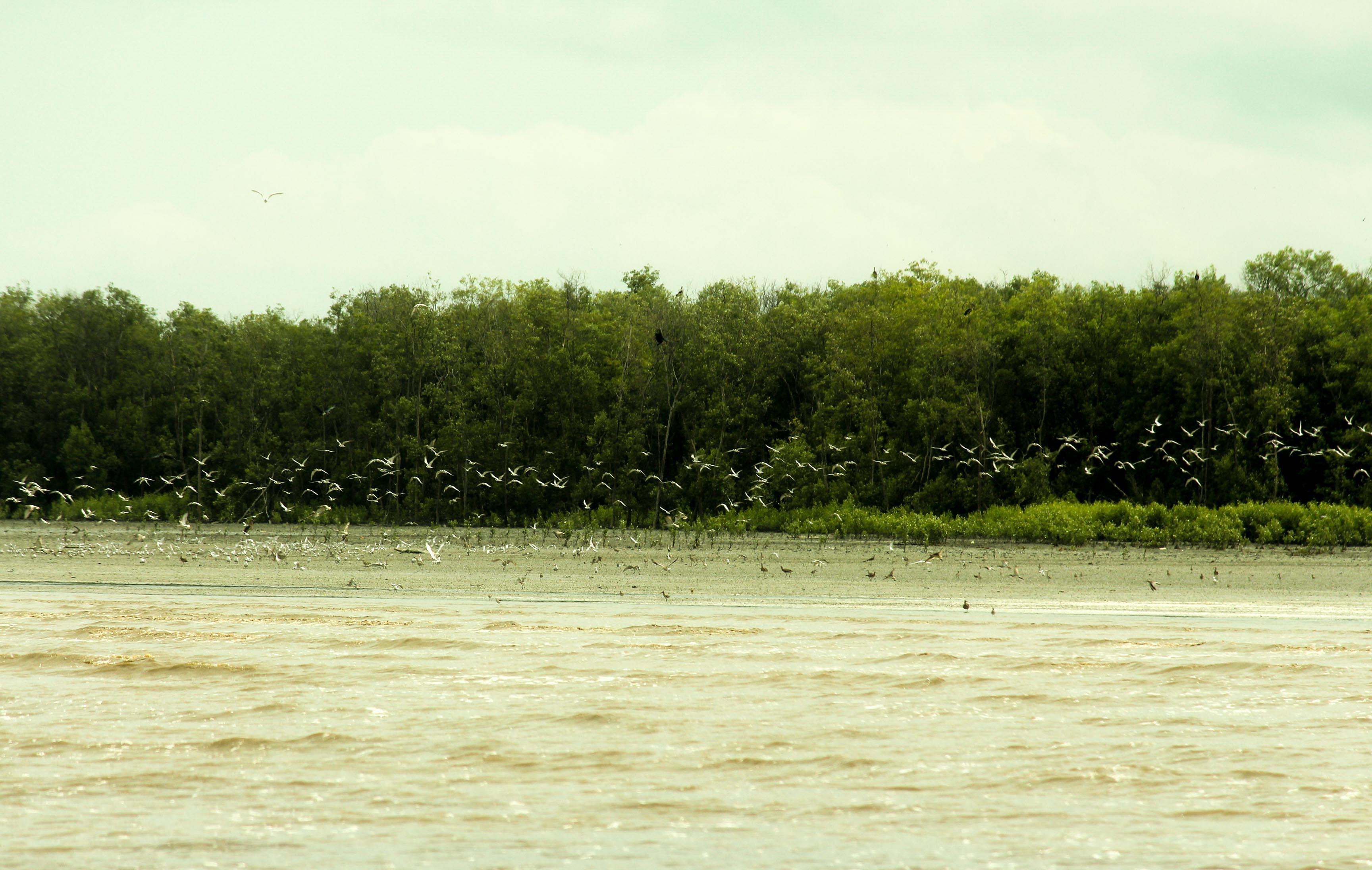 Foto: Burung Pantai Yang Bermigrasi Ke Sembilang