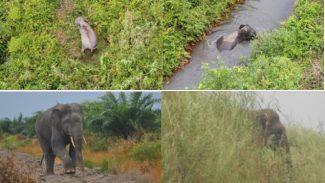 Objek Gajah yang tertangkap kamera dan kamera drone, Foto : Boni HaKI
